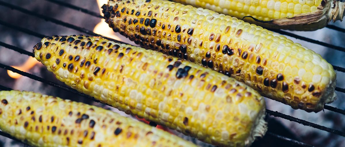 Cooking Corn over the campfire